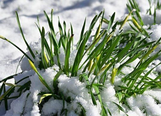 Şubat Ayında Bahçe Bakımı – Kışın Bahçede Yapılması Gerekenler