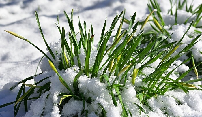 Şubat Ayında Bahçe Bakımı