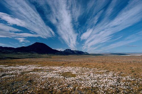 Sibirya Tundraları