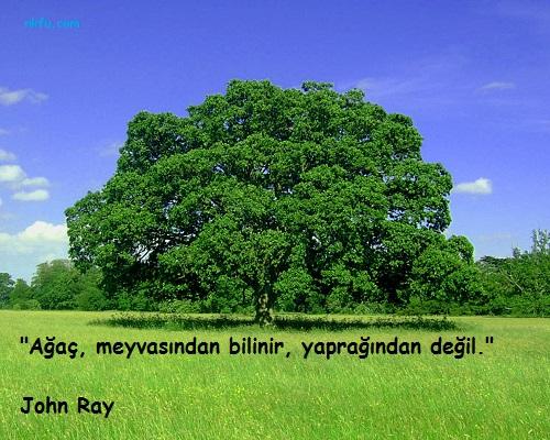 Ağaç İle İlgili Sözler