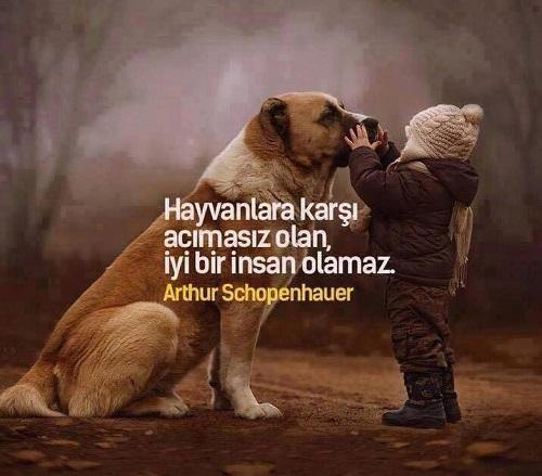 Hayvan sevgisi sözleri
