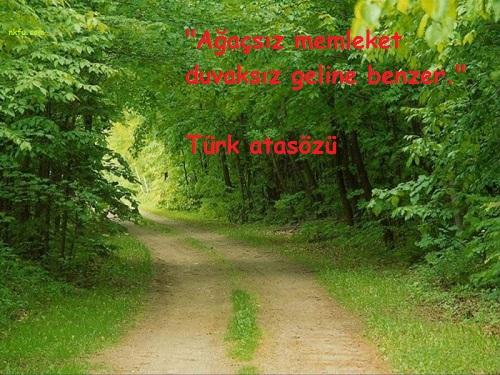 Orman İle İlgili Resimli Sözler