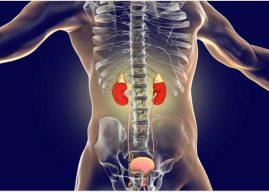 Adrenal Bezi Nedir? Ne İşe Yarar? Görevleri ve Anatomisi Hakkında Bilgi