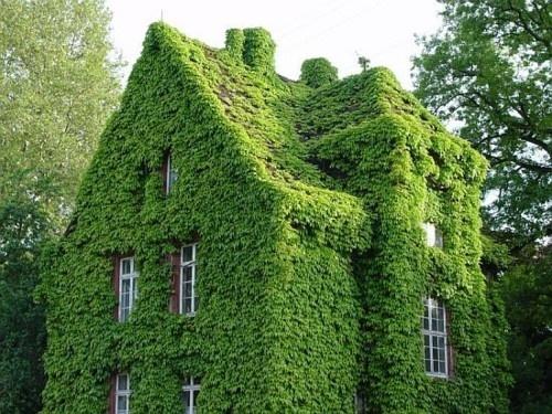 Bitkilerle Kaplı Evler