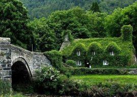 Bitkilerle Kaplı Evler – Binalar ve Çevreye Etkileri