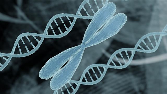 kromozom