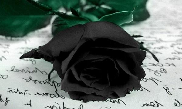 Mektup üzerinde Siyah gül
