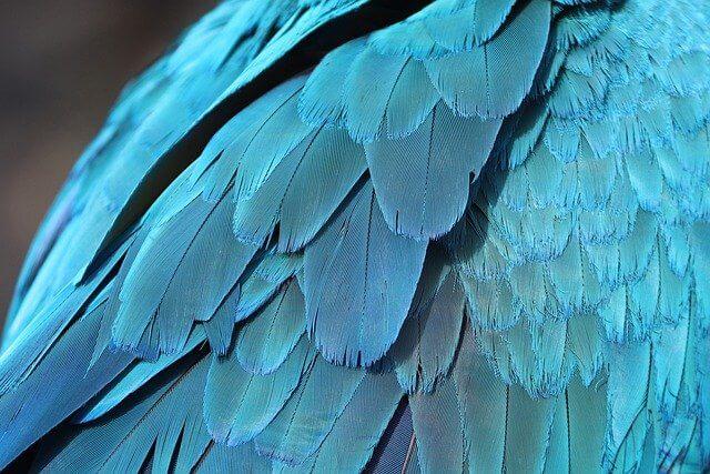 Papağan Tüyü