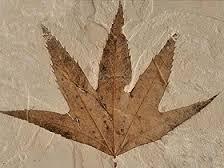 bitki-fosili