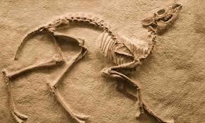 hayvan-fosili