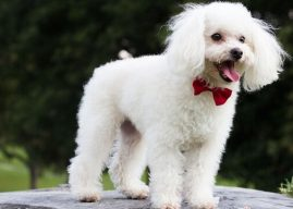 Kaniş Cinsi Köpeklerin Genel Özellikleri, Hakkında Bilinmesi Gerekenler