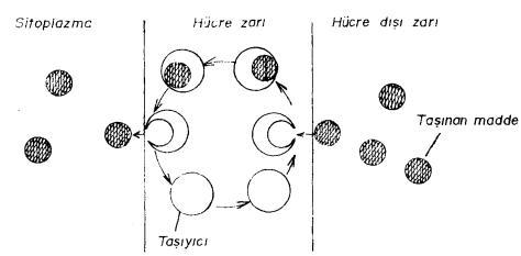 aktif-tasima-1