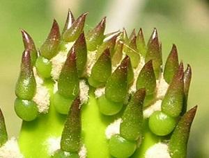Bitkiler ile ilgili bilgiler bitkiler hakkında az bilinen ve ya hiç