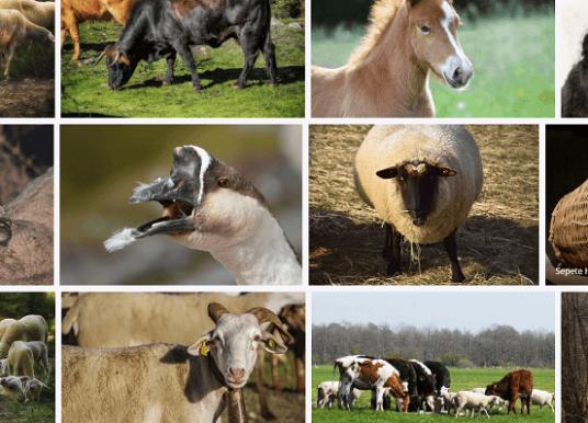 Türkiye'de Hayvancılık : Ülkemizde Hayvancılık Ekonomik Faaliyetleri ve Türleri Nelerdir?