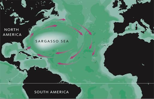 Sargasso Denizi