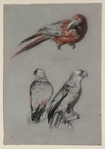 Three Parrots null by Richard Parkes Bonington 1802-1828