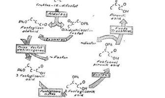 glikoliz