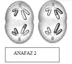 anafaz-2