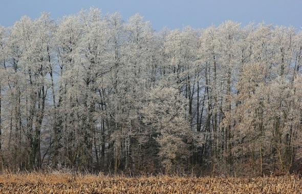 Orman - Ağaçlar