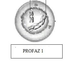 profaz-1