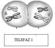 telefaz-1