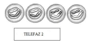 telefaz-2