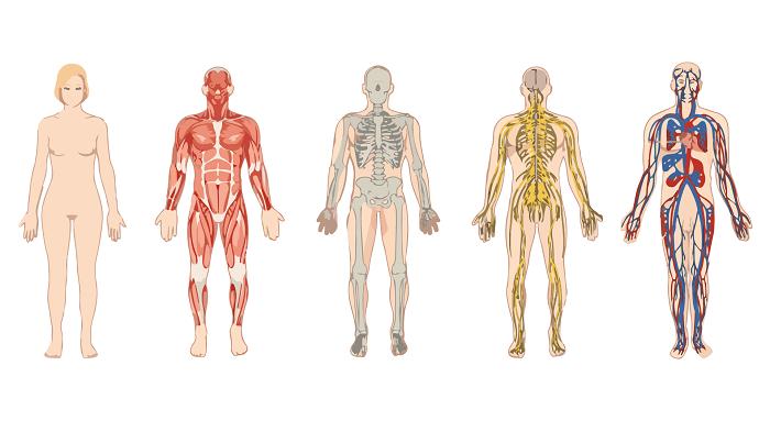 vücudumzdaki sistemler