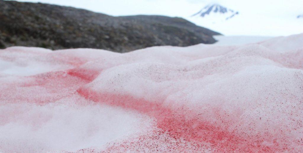 Kırmızı Kar