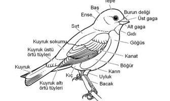 Kuş Anatomisi