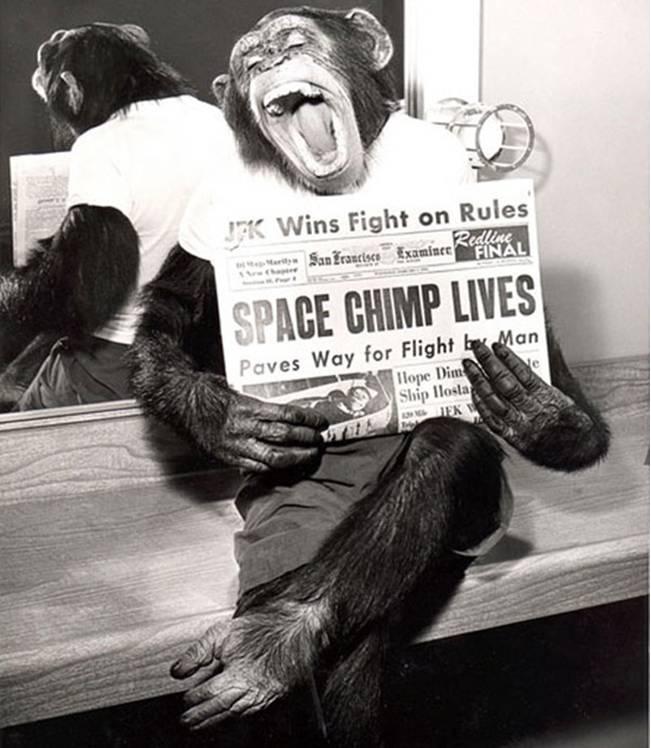 uzay-maymunu