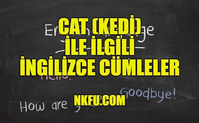 Cat (Kedi) İle İlgili İngilizce Cümleler