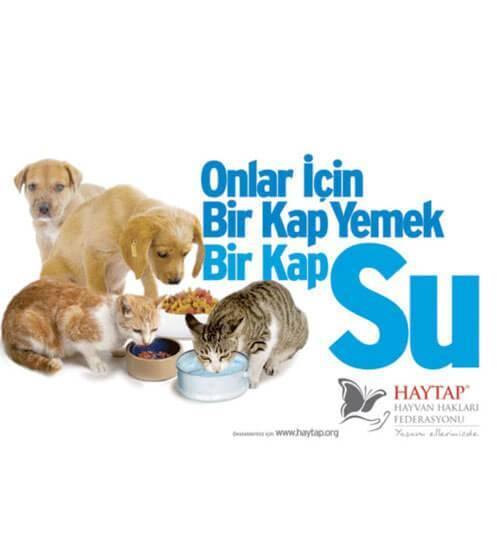 Sokak Hayvanları İle İlgili Sloganlar (Resimli)