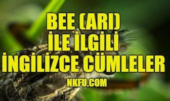 Bee (Arı) İle İlgili İngilizce Cümleler - İngilizce Cümle Örnekleri