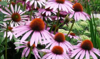 Çiçekler İle İlgili Şiirler