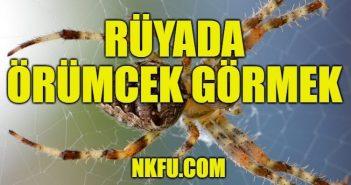 Rüyada Örümcek Görmek Ne Anlama Gelir? Örümcek Isırması, Örümcek Ağı