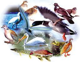 Av Hayvanları