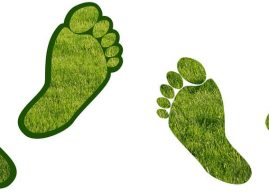 Karbon Ayak İzi ve Ekolojik Ayak İzi Nedir? Nasıl Oluşur, Etkileri Nelerdir?