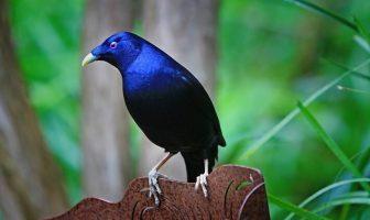 beşik kuşu