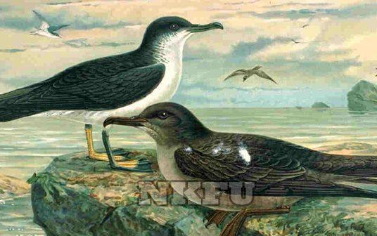 Yelkovan Kuşu Nasıl Bir Kuştur? Özellikleri ve Yaşam Alanları Nelerdir?