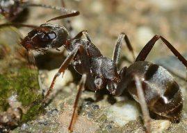 Karıncaların İnsanı Şaşırtan Yaşayışları, Karıncalar Hakkında İlginç Bilgiler