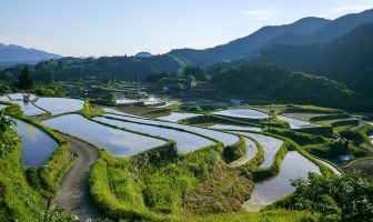 Japonya Pirinç terasları
