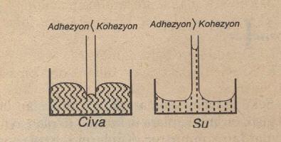 Adhezyon ve Kohezyon Karşılaştırması