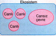 ekosistem-3
