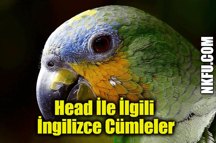 Head (Baş) İle İlgili İngilizce Cümleler