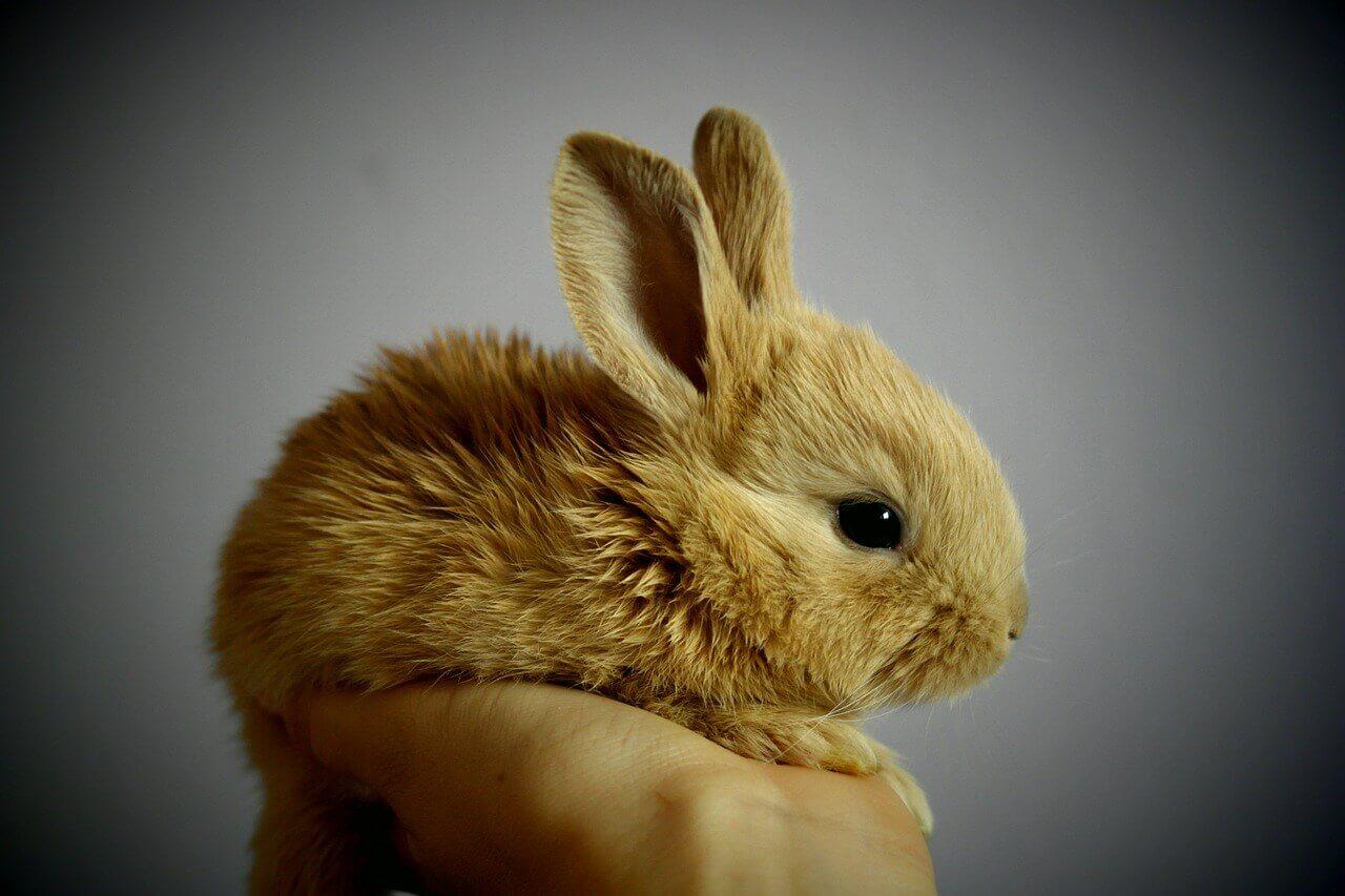 Tavşan Masaüstü Arka Plan Resimleri