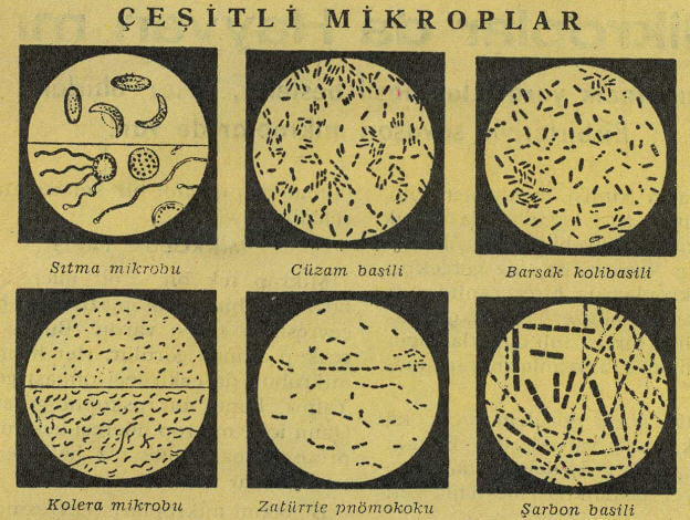 Çeşitli Mikroplar