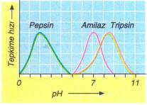 enzim-ph