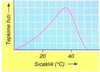 enzim-sicaklik