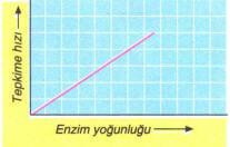 enzim-yogunlugu