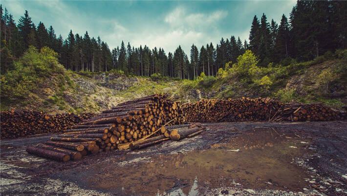 ormancılık